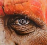 Indian orange © Robert Daalmeijer
